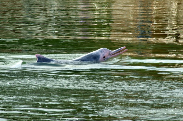 pink dolphin9 | Free stock photos - Rgbstock -Free stock images ...