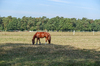 horse on grazing land 2