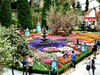 flower dome tulip display10