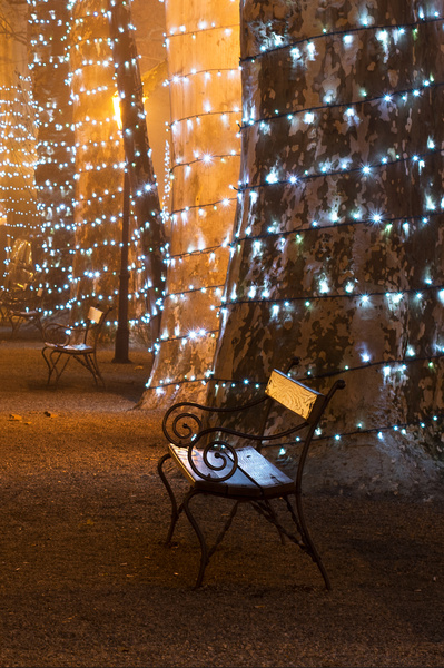 A place for two: A bench in the park with trees decorated with Christmas lamps
