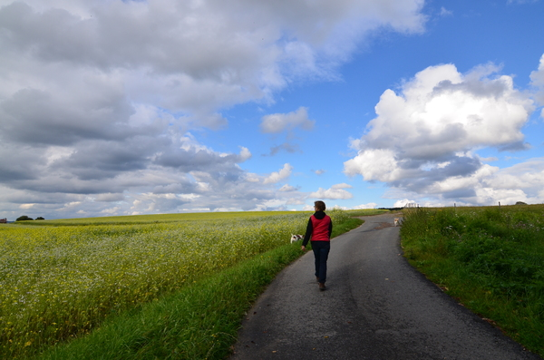 walk trough the mustard fields: walk trough the mustard fields