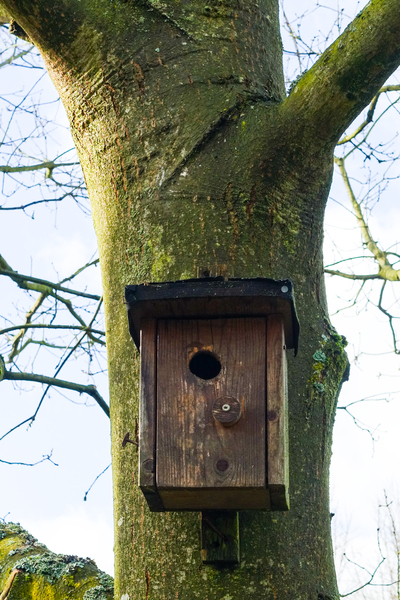 bird house on a tree: bird house on a tree