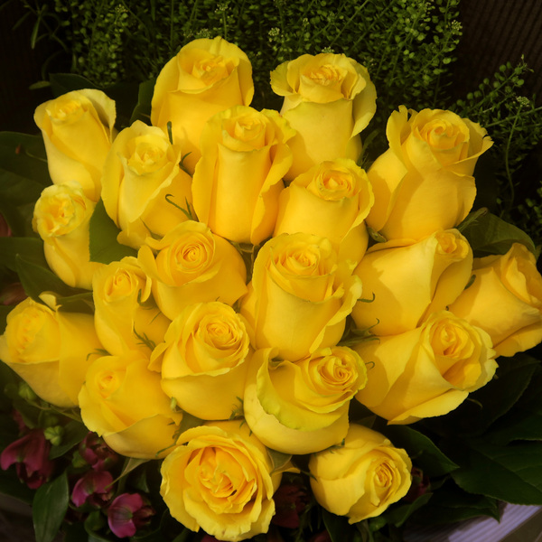 yellow roses 1: awesome yellow roses