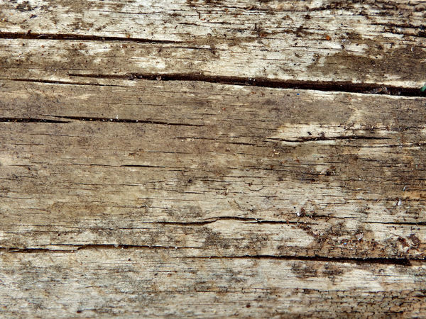 cracked wood textures3: old weathered and cracked wood surface