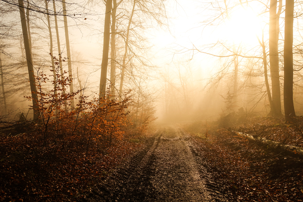 sun and fog in winter forest: sun and fog in winter forest