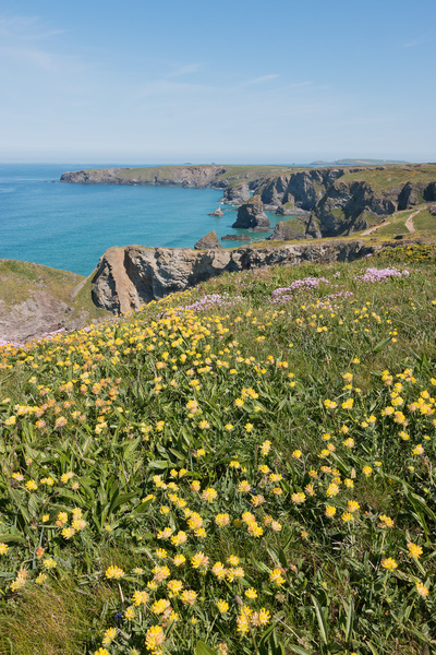 Cornwall coastline: Coastline of northern Cornwall, England, in spring.