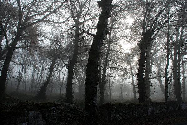 Foggy wood 4: Foggy wood