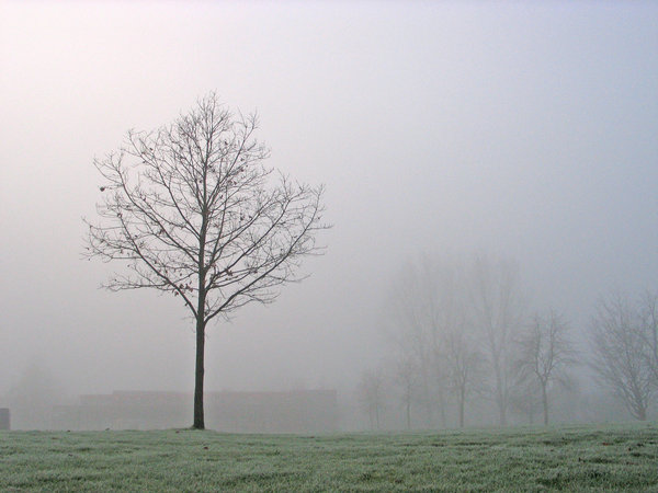 dutch winter: a gray and foggy day. That's our winter in Holland