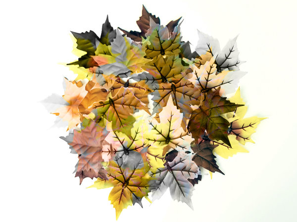 leafs: autumn leafs; a little collage