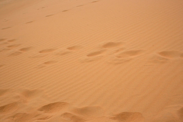 Footprints: Footprints in the sand of the Tengger desert, China.