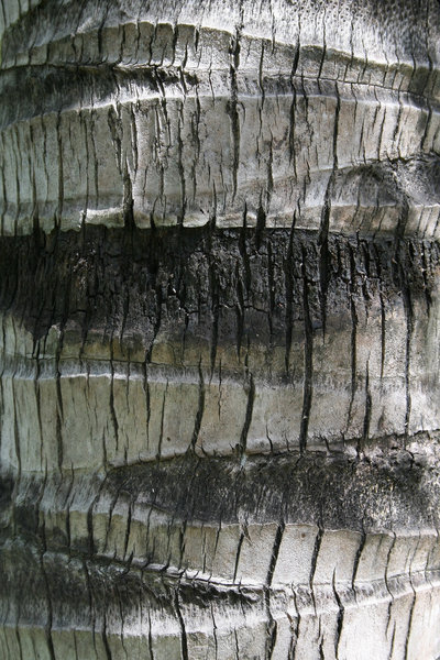 Coconut bark: Bark of a coconut palm in southern China.