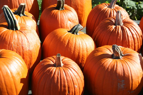 pumpkins: orange pumpkins