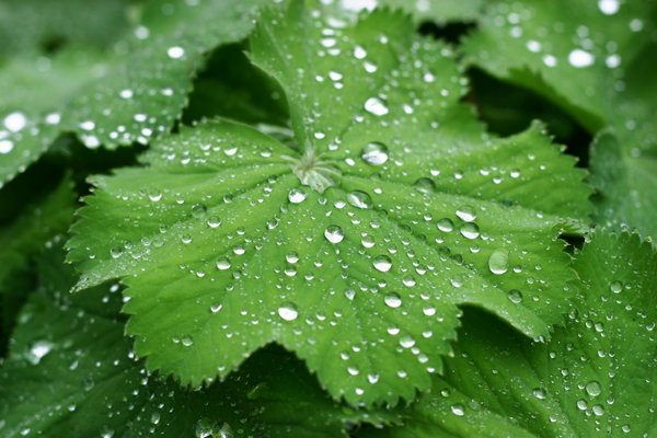 raindrops: raindrops on green plant