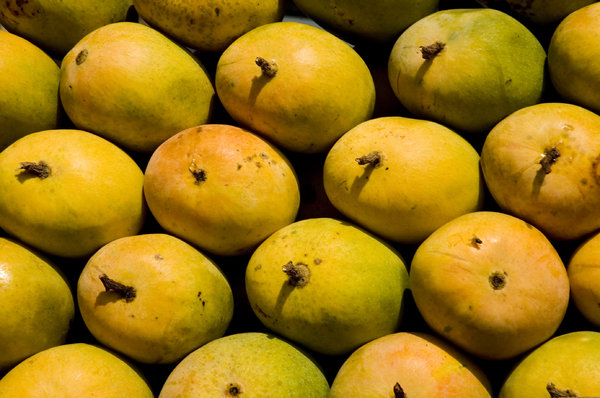 Mangoes: Mangoes and a fly