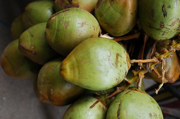 Coconut: Tender Coconut