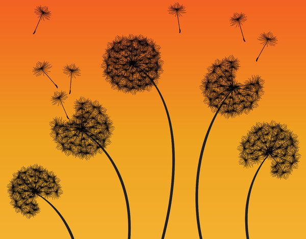 Dandelion Sunset: Dandelions silhouette against a sunset gradient.