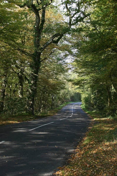 Shady lane: A wooded rural lane in West Sussex, England.