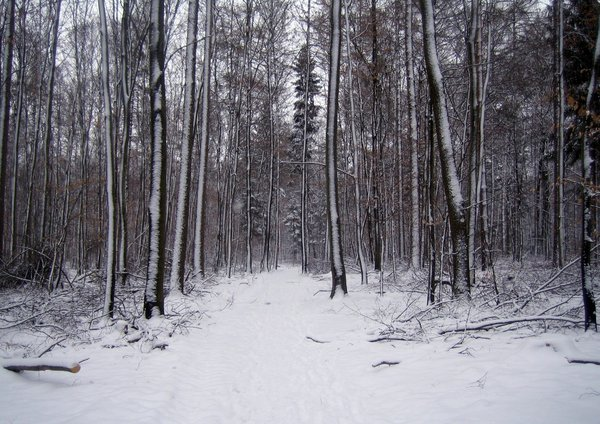 Winter forest: path in a winter forest