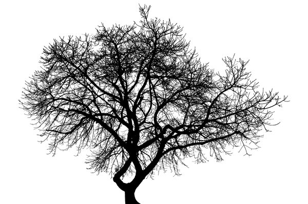 Stark Tree: High contrast line conversion of a winter tree.