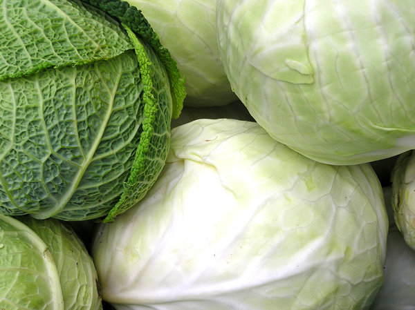 Cabbage: Cabbages.Please mail me if you found it useful. Just to let me know!I would be extremely happy to see the final work even if you think it is nothing special! For me it is (and for my portfolio)!