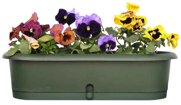 A flowerpot with pansies: A flowepot (balcony type) with beautiful  pansies.Please mail me if you found it useful. Just to let me know!I would be extremely happy to see the final work even if you think it is nothing special! For me it is (and for my portfolio)!