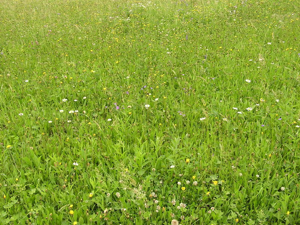 Meadow texture: A green grassland.Please comment this shot or mail me if you found it useful. Just to let me know!I would be extremely happy to see the final work even if you think it is nothing special! For me it is (and for my portfolio).