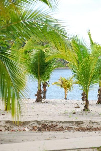 Palm trees  1: Palm trees on the beach