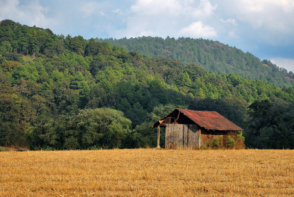 Old wooden shack: Old wooden shack in a field, green hill in the background