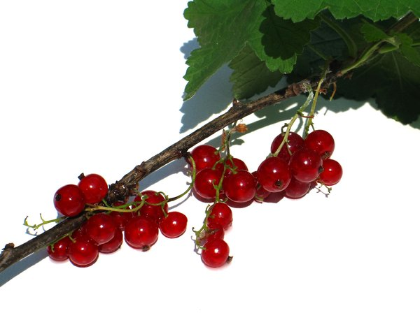 red currant 2: none