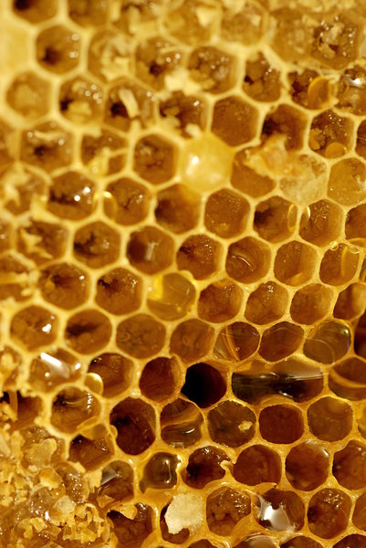 Honeycomb 2: Close-up of honeycomb