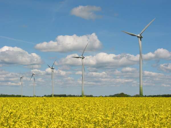 wind mills and yellow field 1: wind mills and rape seed field in Southern part of Sweden. 2006-06-02-
