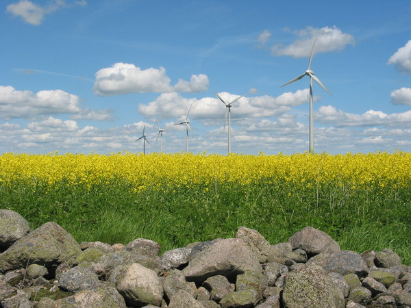 windmills, yellow field and ro: windmills, rape field and rocks, Skane, Sweden.