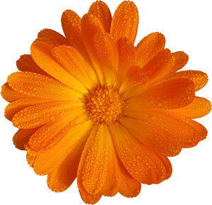 Free stock photos rgbstock free stock images 146 1 grade accountcircle orange flower mightylinksfo