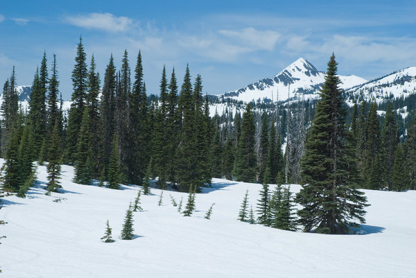 Spring Snow: Mount Rainer national park in mid-May. Washington, USA.
