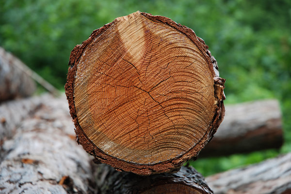 Cross Section: Timber.