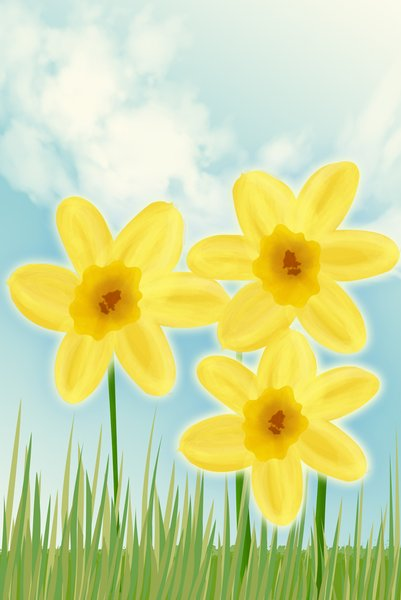 Daffodil drawing: daffodil spring illustration