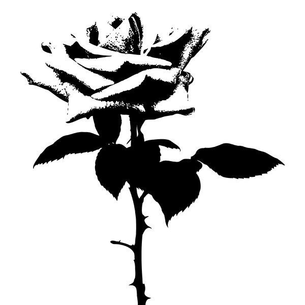 Rose Silhouette: Rose silhouette.  Black over white background.