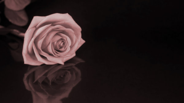 Sepia Rose: Rose card.  Lots of copy space.