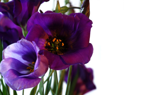 free stock photos  rgbstock  free stock images  purple flower, Beautiful flower
