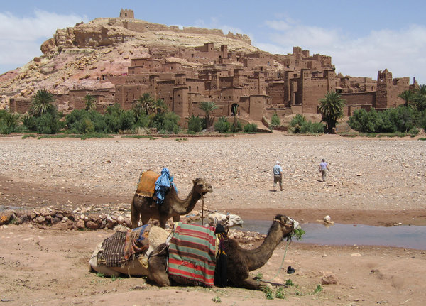 Camels at the kasbah, Taourit: The old Kasbah of Ait benhaddou over the dried up river bed at Taourit in Morocco