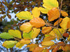 a branch of autumn leaves
