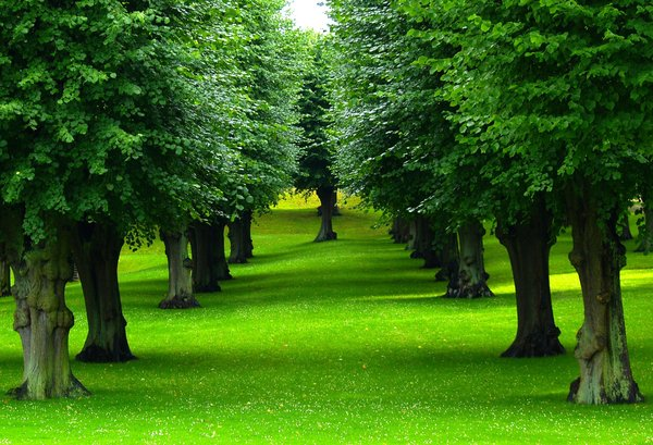 Summerpark 1: Park just after rain. Everything is fresh and deepgreen