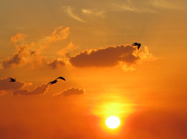 Flight through Dusk: Birds in flight before nightfall