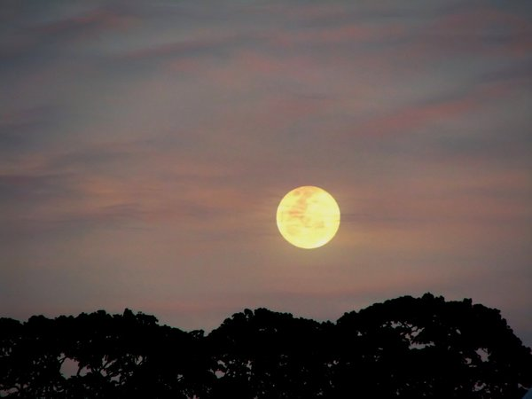 Early Moon: Moon over the tree line