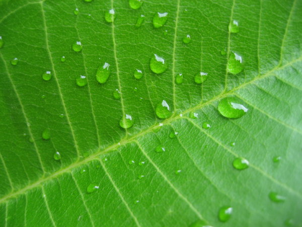 leaf droplets 2: ...