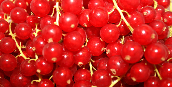 Redcurrants: no description