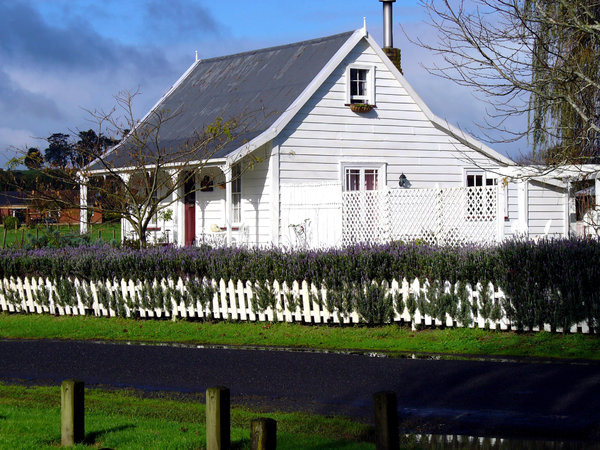 Colonial cottage New Zealand: White cottage from settler times in New Zealand, lavender hedge behind picket fence. Recent rain on country road.