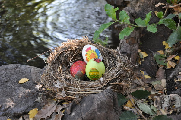 Easter eggs waiting to be foun: Easter eggs painted by grandma in the forest waiting to be found!