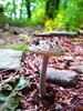 Stool on the path