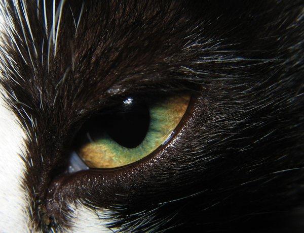 Eye: No description